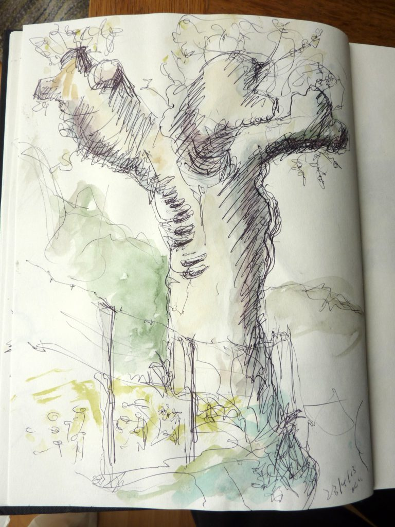 Baum auf Krk / Kugelschreiber u. Aquarell / 2013